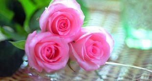 بالصور صور ازهار حلوه , اجمل صور ازهار 7946 13 310x165
