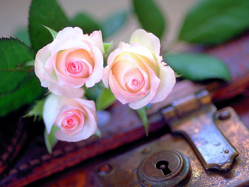بالصور صور ازهار حلوه , اجمل صور ازهار 7946 2