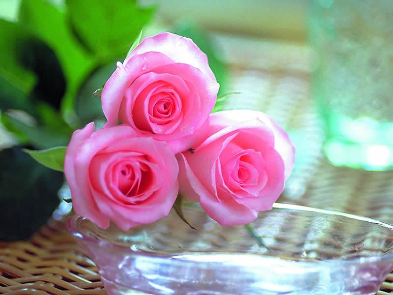 صورة صور ازهار حلوه , اجمل صور ازهار