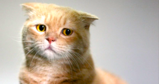 بالصور صور قطط حزينه , اروع لقطات مصورة لقطط حزينة 8679 1 310x165
