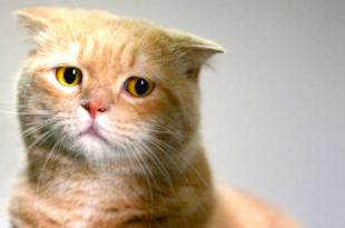 صور صور قطط حزينه , اروع لقطات مصورة لقطط حزينة