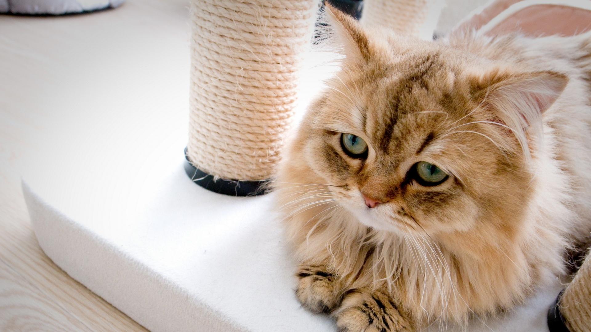 بالصور صور قطط حزينه , اروع لقطات مصورة لقطط حزينة 8679 2