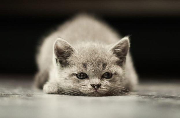بالصور صور قطط حزينه , اروع لقطات مصورة لقطط حزينة 8679 3