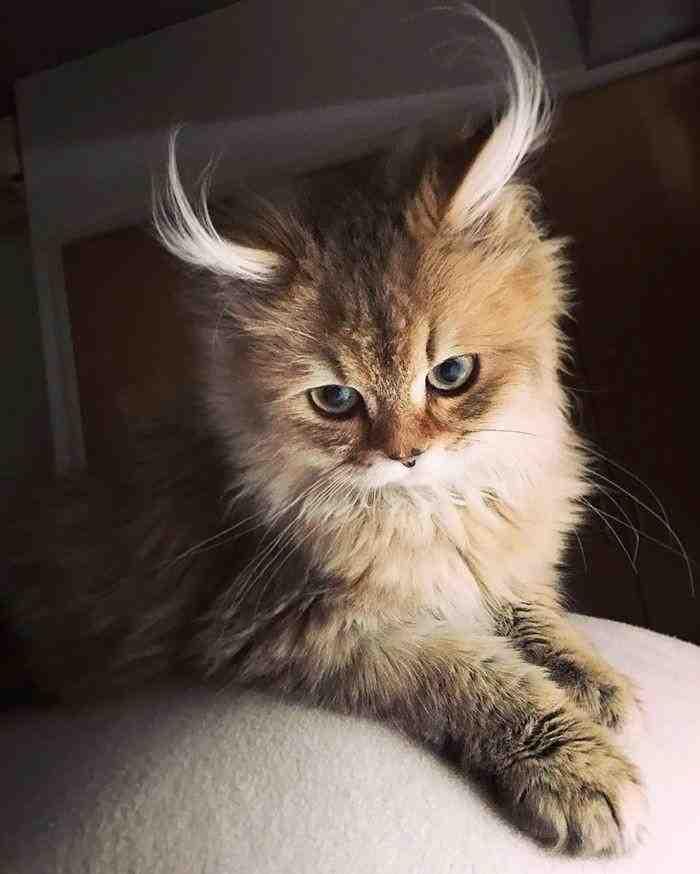 بالصور صور قطط حزينه , اروع لقطات مصورة لقطط حزينة 8679 4