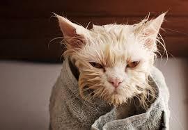 بالصور صور قطط حزينه , اروع لقطات مصورة لقطط حزينة 8679 5