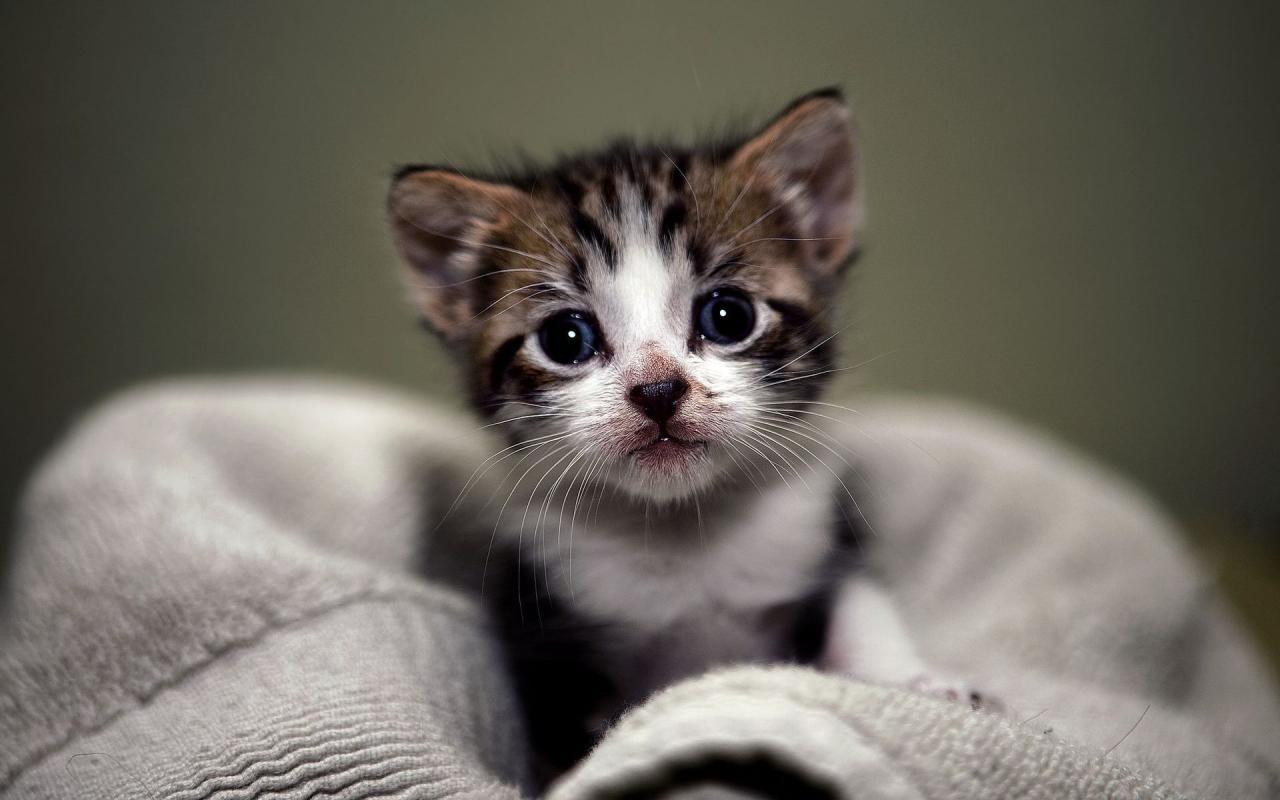بالصور صور قطط حزينه , اروع لقطات مصورة لقطط حزينة 8679 6