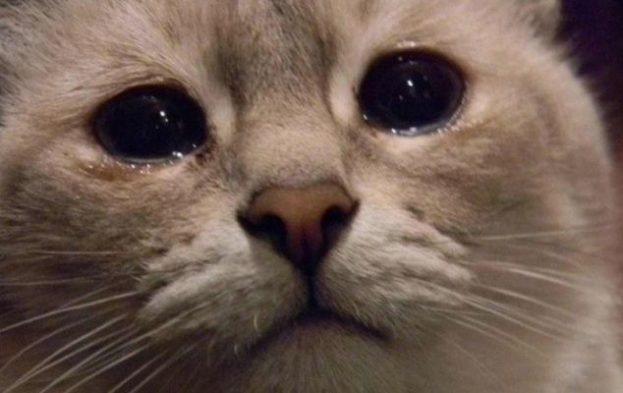 بالصور صور قطط حزينه , اروع لقطات مصورة لقطط حزينة 8679 7