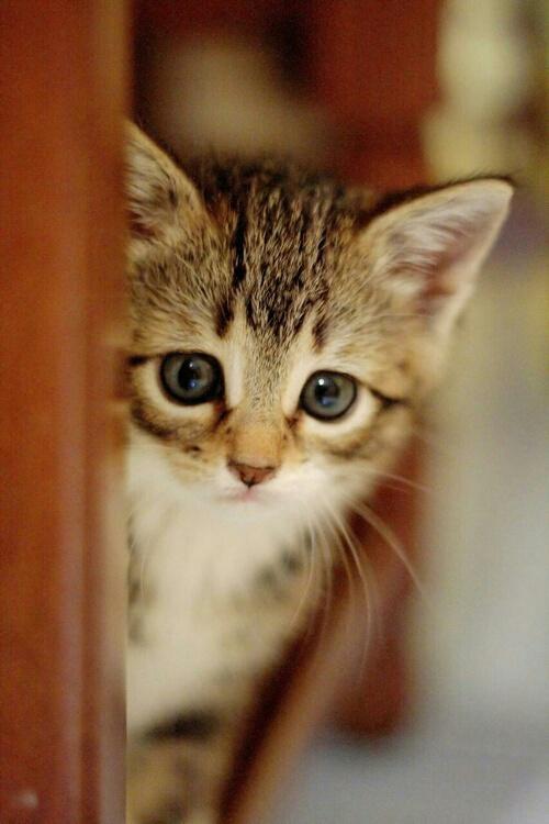 بالصور صور قطط حزينه , اروع لقطات مصورة لقطط حزينة 8679 8