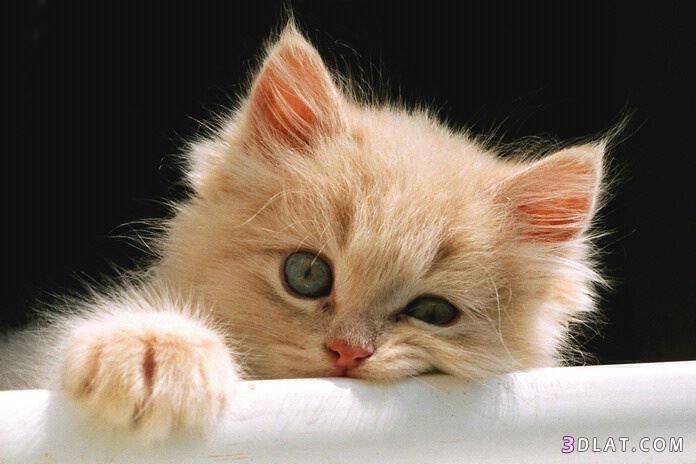 بالصور صور قطط حزينه , اروع لقطات مصورة لقطط حزينة 8679 9