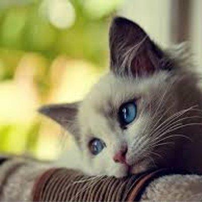 بالصور صور قطط حزينه , اروع لقطات مصورة لقطط حزينة