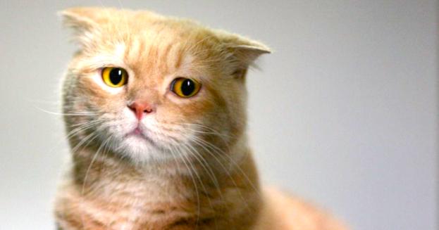 صورة صور قطط حزينه , اروع لقطات مصورة لقطط حزينة
