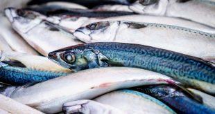 تفسير حلم شراء السمك لابن سيرين , رؤية شراء السمك لابن سيرين