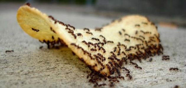 صورة القضاء على النمل في البيت , طرق مبتكرة لطرد النمل من المنزل