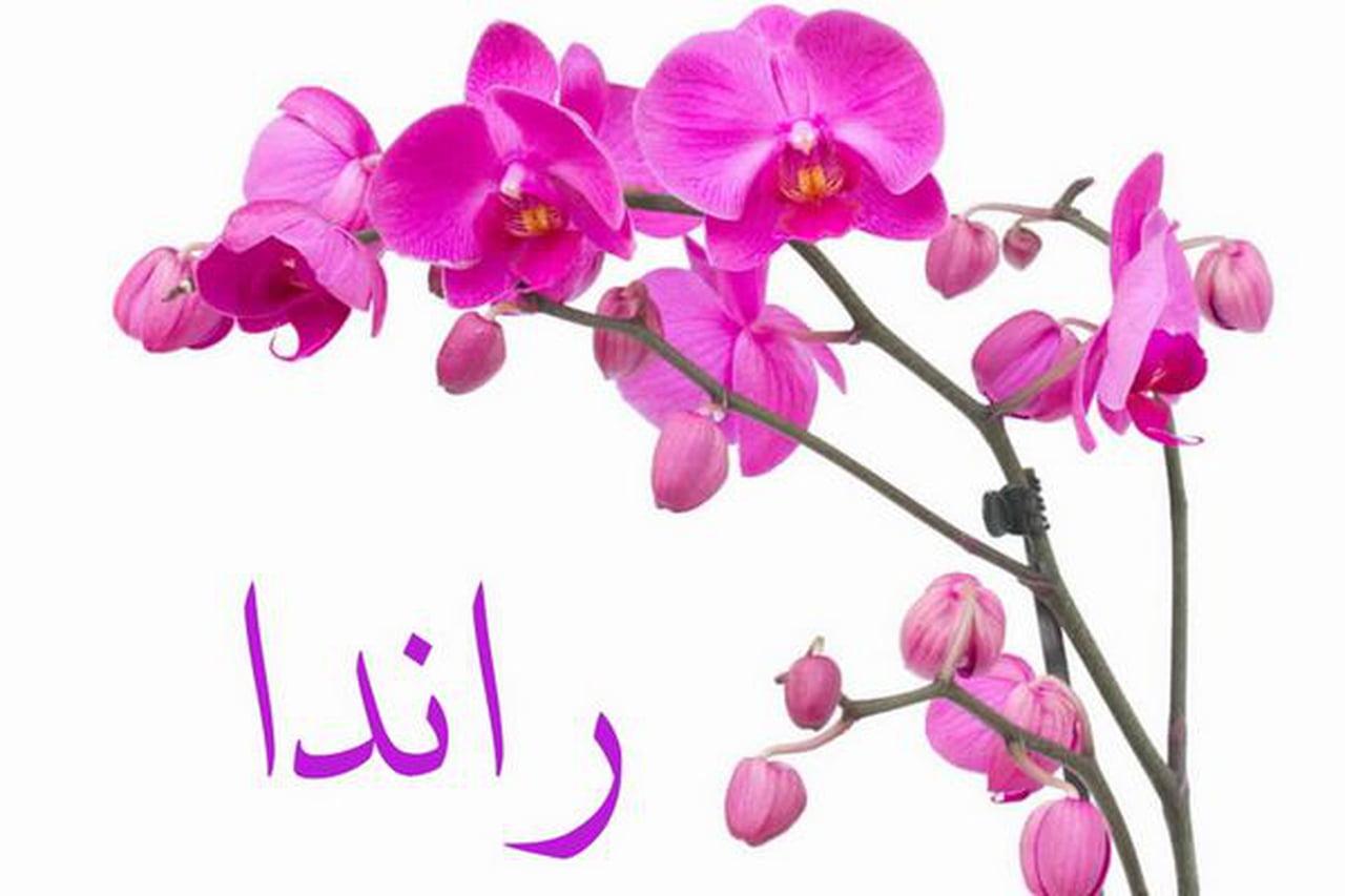 بالصور معنى اسم رندة , تفسير اسم بنت رندة فى قاموس الاسماء 8798 1