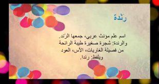 معنى اسم رندة , تفسير اسم بنت رندة فى قاموس الاسماء