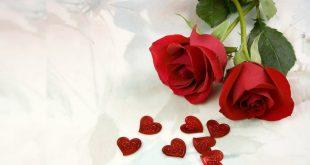 صور خلفيات ورود حمراء , اروع صور لازهار وورد حمراء اللون