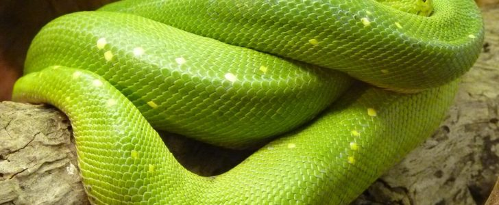 صورة تفسير حلم ثعبان اخضر يلاحقني , رؤية فى المنام ثعبان اخضر يركد ورائي