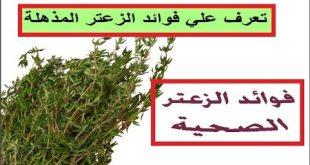 بالصور فوائد واضرار الزعتر , الزعتر نباتات عشبية خطيرة 10988 11 310x165