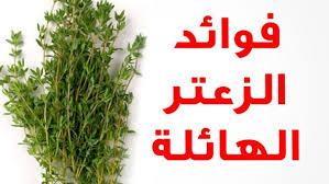 بالصور فوائد واضرار الزعتر , الزعتر نباتات عشبية خطيرة 10988 2