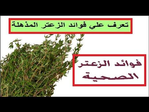 بالصور فوائد واضرار الزعتر , الزعتر نباتات عشبية خطيرة 10988