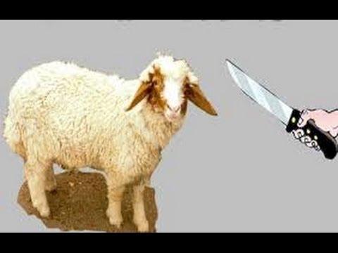 صور طريقة الذبح الاسلامي , طريقة ذبح الذبيحة على الشريعة الاسلامية