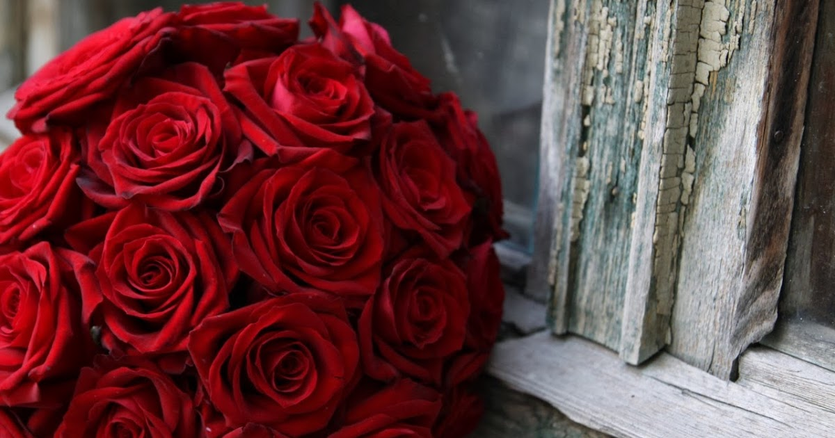 صور ورد جوري احمر طبيعي اجمل صور للورد الجوري الاحمر كلام حب