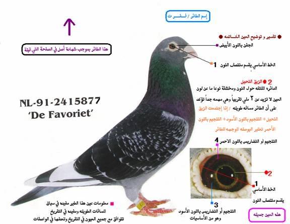 صورة معلومات عن الحمام , افضل الطرق لتربيه الحمام 11236 3