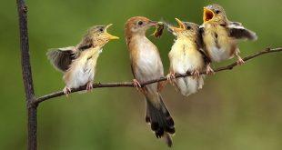 صور تفسير العصافير في الحلم , رؤية طيور العصافير فى المنام