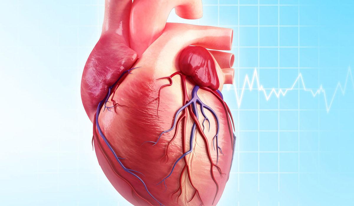 صور كيف اقوي عضلة القلب , الاهتمام بعضلة القلب وتقويتها