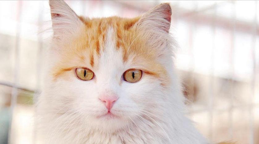 صورة هرة في المنام , تفسير رؤية القطة فى الحلم