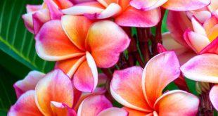صور صور ورد جميلات , احلى واجمل اشكال الورد