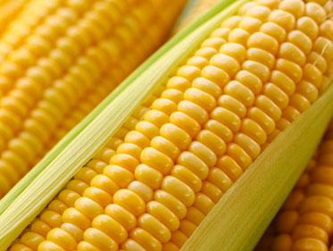 صور موضوع عن الذرة , بحث عن الذرة واهميته
