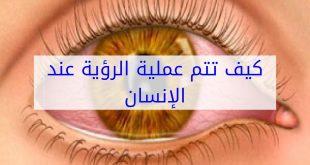 صورة مجال الرؤية عند الانسان , تعرف كيف يقاس مجال الرؤيه 11386 3 310x165