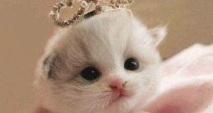 صور صور قطط صغير , صغار القطط واجمل تعابيرهم