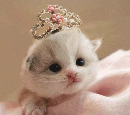 صورة صور قطط صغير , صغار القطط واجمل تعابيرهم
