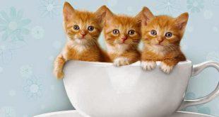صور اجمل صور قطط , احلى القطط الموجودة في العالم