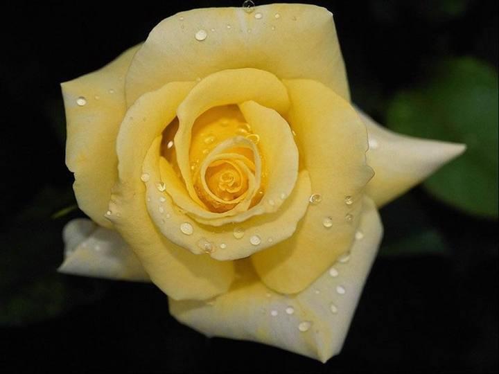 صور صور زهور , مجموعة من الزهور الجميلة