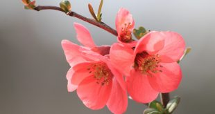 صور زهور , مجموعة من الزهور الجميلة
