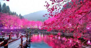 اجمل صور مناظر طبيعيه , شاهد اجمل المناظر الطبيعيه