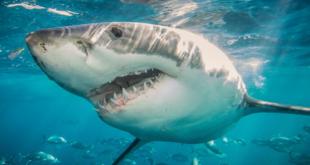 صور سمك القرش , اخطر اسماك في العالم