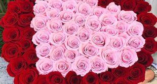 صورة صور اجمل ورد , مجموعه من الورود في منتها الروعه و الجمال