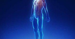 صور صور جسم الانسان , الصور التعليمية لجسم الانسان