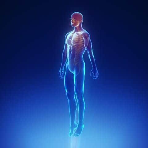 صورة صور جسم الانسان , الصور التعليمية لجسم الانسان