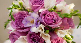 صور اجمل الصور زهور , اجمل صور زهور طبيعية في غاية الروعة