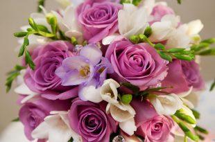صورة اجمل الصور زهور , اجمل صور زهور طبيعية في غاية الروعة