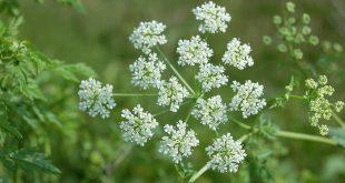 صور بحث عن النباتات الطبيعية بالصور , اهميه النباتات في الحياه