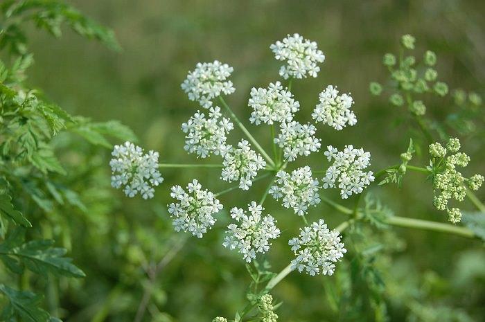 صورة بحث عن النباتات الطبيعية بالصور , اهميه النباتات في الحياه