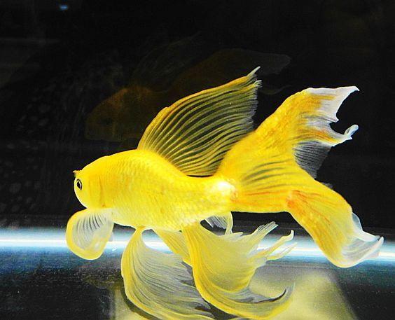 صورة صور عن الاسماك , شاهد اجمل اسماك العالم