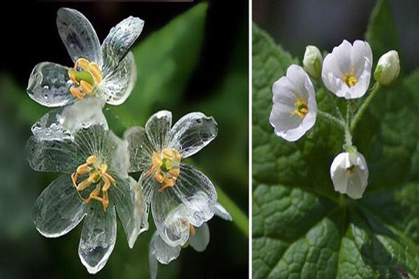 صور صور زهور نادره , اجمل واندر الزهور في العالم