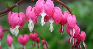صور زهور نادره , اجمل واندر الزهور في العالم